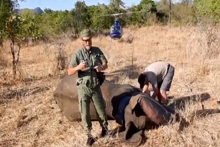 Elefantes controlados por satélite no Niassa