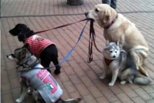 Cães de Berlim passam a ter carta de condução