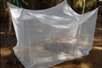 Ministério da Saúde quer rácio de uma rede mosquiteira para duas pessoas