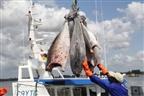 Moçambique poderá exportar 14 mil toneladas de pescado este ano