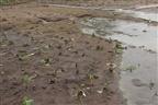 Chuvas poderão agravar preço de hortícolas em Maputo
