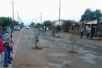 Na Manga: População planta árvores nos buracos das estradas