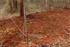 Encontrados sete corpos nas matas em Murrupula
