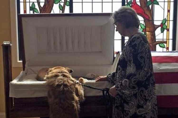 Imagem de cão a despedir-se de dono no funeral emociona os internautas