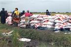 Distrito de Chókwè prevê colher acima de 15 mil toneladas de arroz