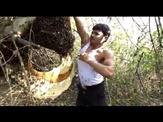 wild honey hunter dangerous honey bee video and indian darin man