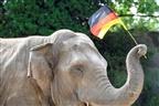 Elefante vai prever os resultados do Euro2020