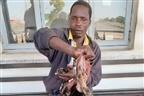 Jovem apanhado a vender carne de cão na Província de Maputo
